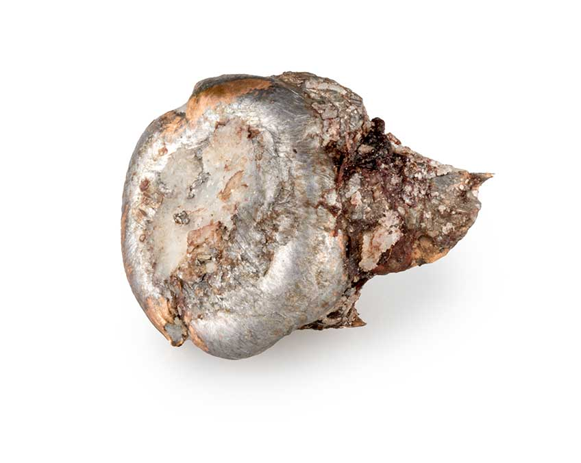 """The 6.8 mm Western performed extremely well during an elk/mule deer hunt in October. This bullet was retrieved from an elk cow shot at 220 yds., and it expanded to between 0.51"""" and 0.60"""" in diameter."""